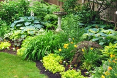 Plants-for-part-Shade-Garde