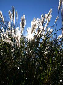 CT Grass