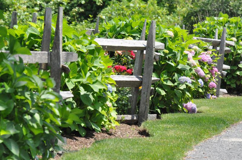 garden-by-the-sea-hydrangea