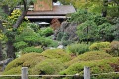 Japanese Garden San Francisco (11)