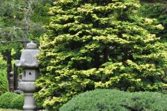 Japanese Garden San Francisco (15)
