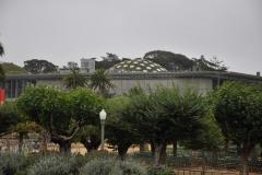 Japanese Garden San Francisco (2)