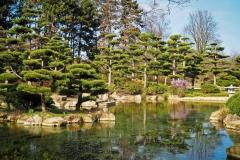 Japanese-Garden-trees