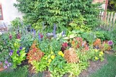 SHade-annuals