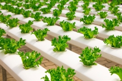 Vegetable-gardening-greenho