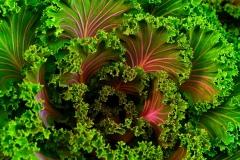 vegetable-gardening-plant