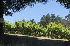 California Wine Tasting Sonoma (1)