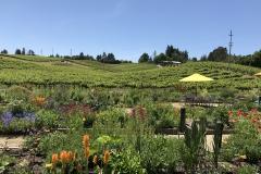 California Wine Tasting Sonoma (40)