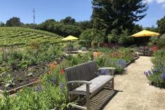 California Wine Tasting Sonoma (60)