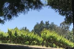 California Wine Tasting Sonoma (92)