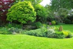 Water-garden-trees-shrubs