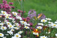 Wildflower-Field-Daisies-Coneflowers