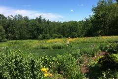 Wildflower Fields (1)