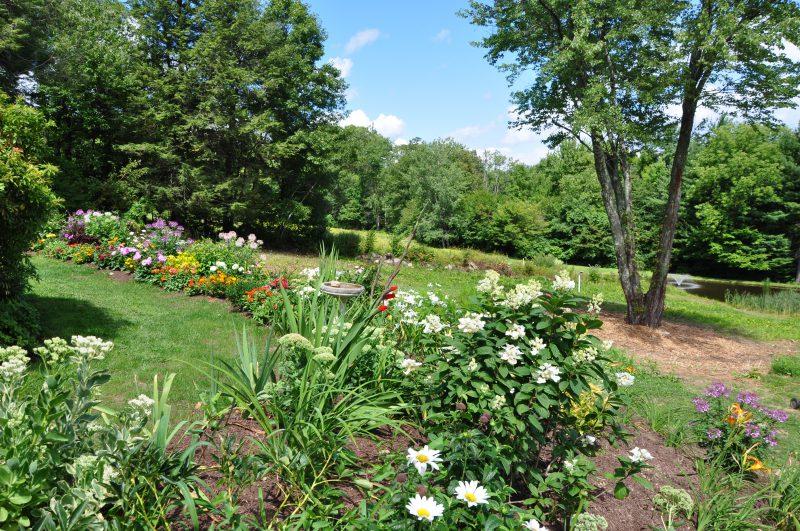 Peonies, Gardens June Blooms