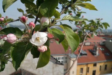 City rooftop gardens