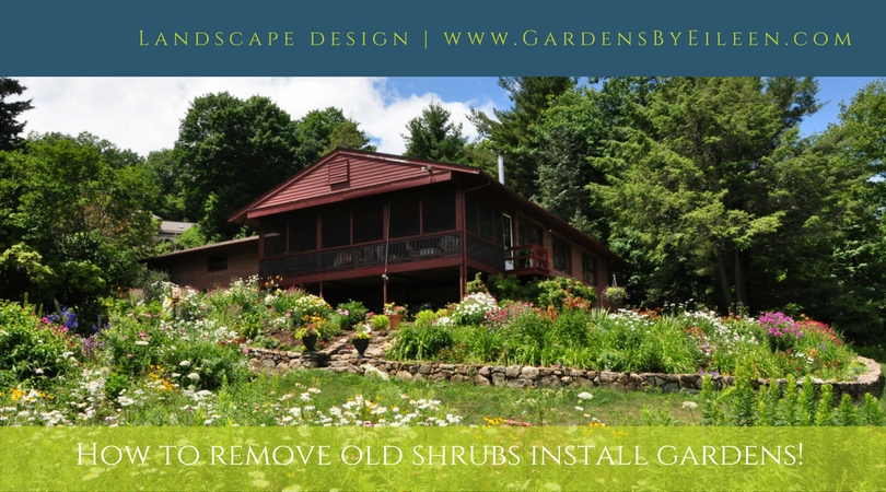 Remove old shrubs create gardens