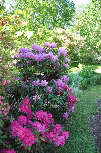 Trees shrubs June gardening