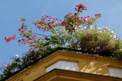 Rootop-corner-garden