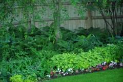Shade-Garden-Ferns