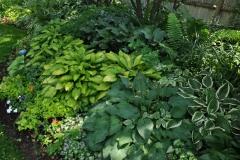 Shade-Garden-Hostas