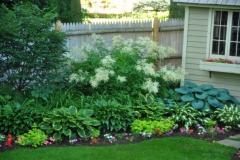 Shade-Plants---Hostas